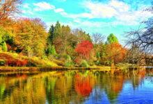 Photo of حدائق.. نادرة وسعيدة وسامة