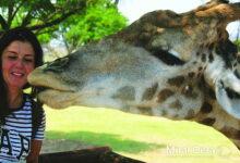 Photo of أتحاور مع الحيوانات وأفهم مشاعرها باستخدم «التخاطر»