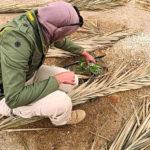 د.سارة صلاح العتيقي حبي لوطني سبب دراستي لعلم النباتات والتطوع للبيئة