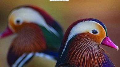Photo of محمية «باب دكالة» تحتضن نوادر الطيور والحيوانات