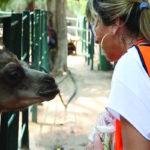 دينا ذوالفقار لـ «أسرتي»: تربطني بالحيوانات علاقة عشق ولغة حوار