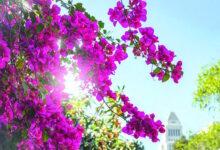 Photo of حديقتك المنزلية.. تلوّن «مودك» للأحلى والأروع