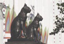 Photo of خرافة لا يزال كثير من الناس يؤمنون بها القطة السوداء من معبودة إلى الشؤم.. والنحس