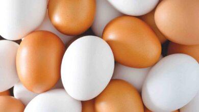 Photo of بيضة واحدة يومياً توفّر %40 من فيتامين «د» البيض: بروتينات.. فيتامينات.. ومضادات!