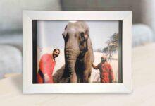 Photo of قصة الفيلة «عزيزة»..  تجسيد للإنسانية في محنة الغزو