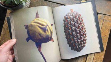 Photo of أقامه المصور الفرنسي ليفون بيس قصة أكبر بذرة في العالم.. في معرض لصور النباتات والبذور النادرة